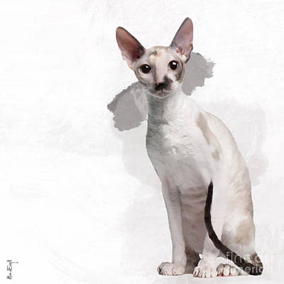 Beautiful Two-color Eyes Cornish Rex Poster