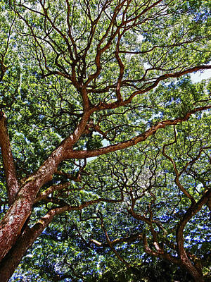 Beautiful Waimea Trees Poster
