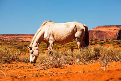 Beautiful Wild Horse In Utah Red Rock Desert Poster