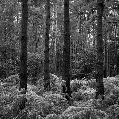 Beautifully Toned Black And White Landscape Of Woodland In Autum Poster by Matthew Gibson