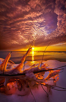Became Entwined Poster by Phil Koch
