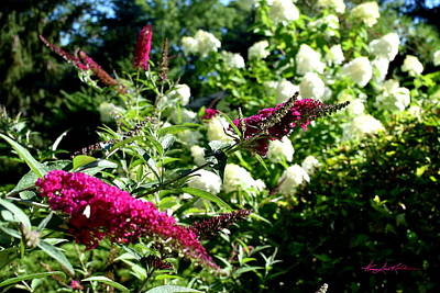 Beckoning Butterfly Bush Poster