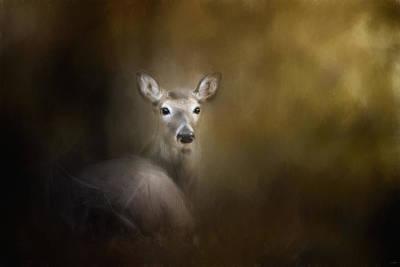 Bedded Down Deer Art Poster