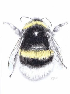 Bee Poster by Katy Scott Ricketts