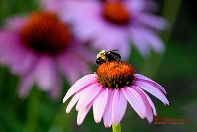 Bee Left Poster by Paul SEQUENCE Ferguson             sequence dot net