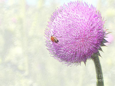 Bee On Giant Thistle Poster