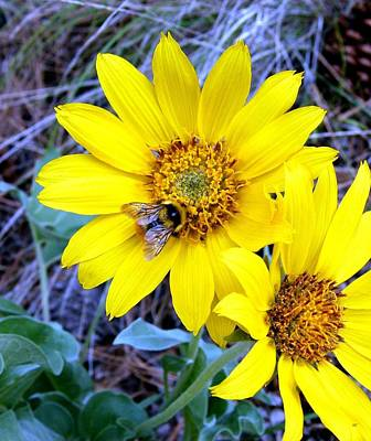 Bee On Wild Sunflowers Poster