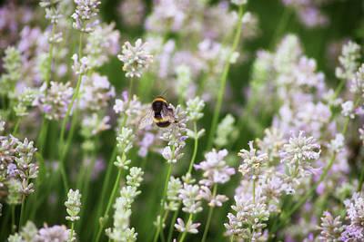 Bee Pollen Poster