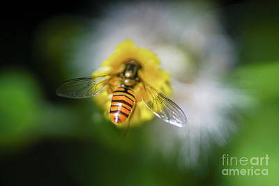 Bee Pollinating A Flower. Poster