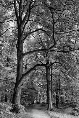 Beech Forest - 365-222 Poster