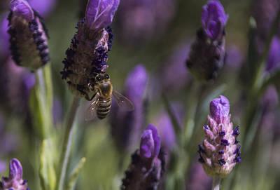 Bee's Delight Poster by Laura Pratt