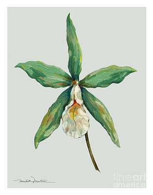 Bell Orchids Poster by Meridith Martens