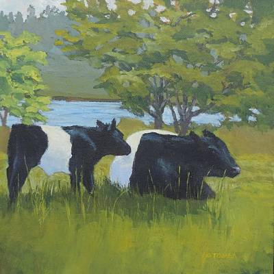 Belted Galloway And Calf Poster by Bill Tomsa