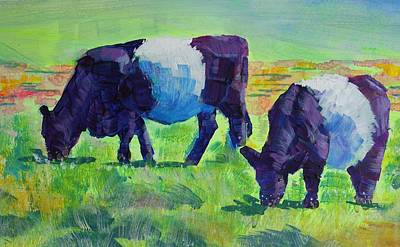 Belted Galloway Cows Grazing Poster