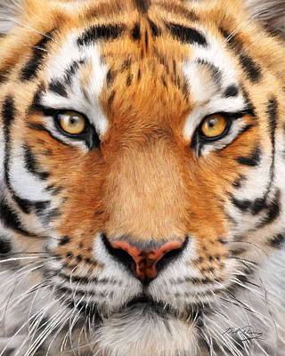 Bengal Tiger Poster by Bill Fleming