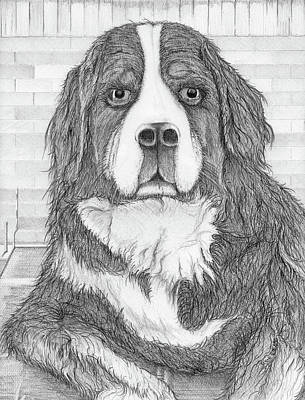 Poster featuring the drawing Bernese Mountain Dog  by Jason Girard