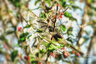 Poster featuring the photograph Berry Merry Mockingbird by Kerri Farley