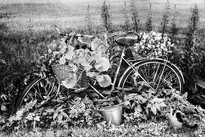 Bicycle In The Flower Garden Black And White Poster