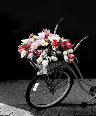 Bicycle With Tulips Poster by Art Spectrum