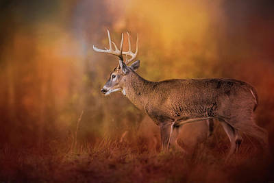 Big Buck In Autumn White Tailed Deer Art Poster by Jai Johnson