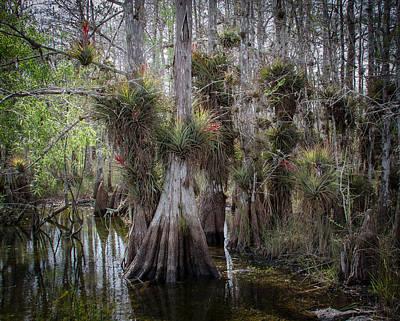 Big Cypress Preserve Poster
