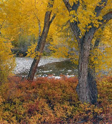 Big Lost Autumn Poster