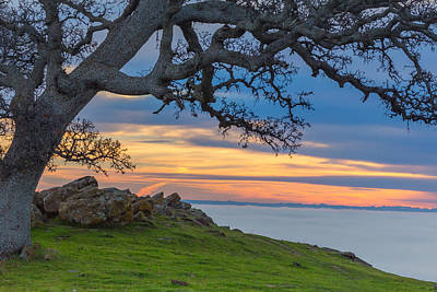Big Oak Above Fog Poster by Marc Crumpler