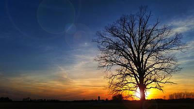 Big Oak Splendor Poster