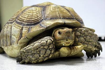 Big Ol Turtle Poster