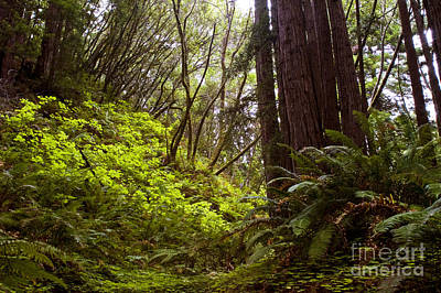 Poster featuring the photograph Big Sur Red Woods by Gary Brandes