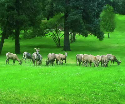 Poster featuring the digital art Bighorn Sheep Ewes  by Chris Flees