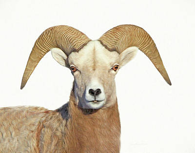 Poster featuring the photograph Bighorn Sheep Ram by Jennie Marie Schell