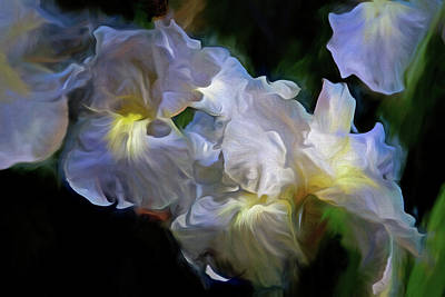 Billowing Irises Poster