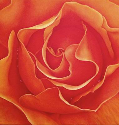 Biltmore Rose Poster by Dee Dee  Whittle