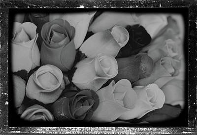 Birch Bark Roses 20 Poster by Cindy Nunn