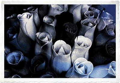 Birch Bark Roses 3 Poster by Cindy Nunn