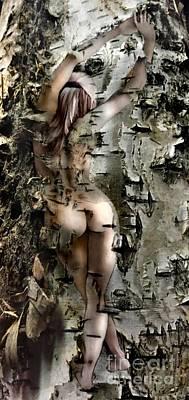 Birch Beauty Poster by Tlynn Brentnall