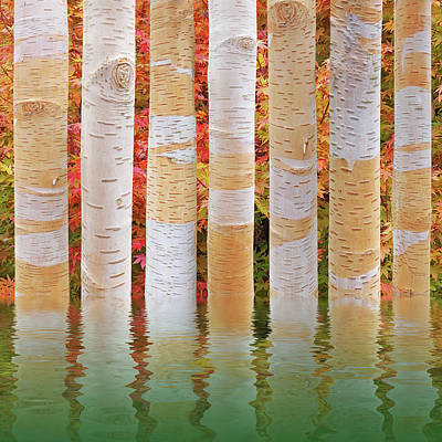 Birch Tree Autumn Abstract Reflections Poster