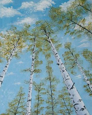 Birch Trees And Sky Poster