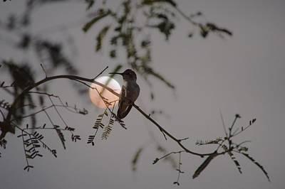 Bird And Blood Moon Poster by Carolina Liechtenstein