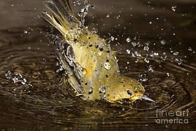 Bird Bath Poster by Dave Fleetham - Printscapes