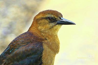 Poster featuring the photograph Bird Beauty by Deborah Benoit