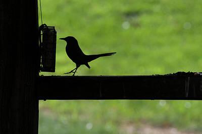 Bird Feeding In Silhouette Poster