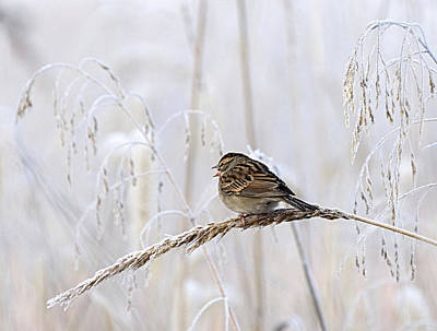 Bird In First Frost Poster