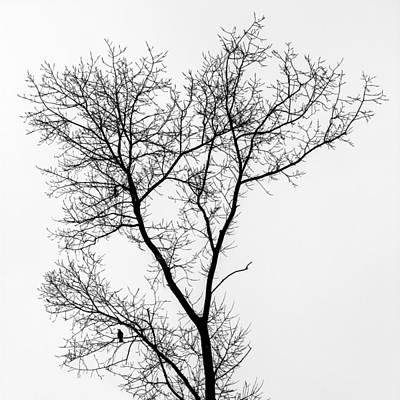 Bird In Tree Poster by Wim Lanclus