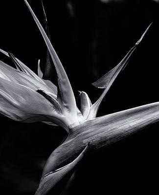 Bird Of Paradise Poster by Erik Poppke
