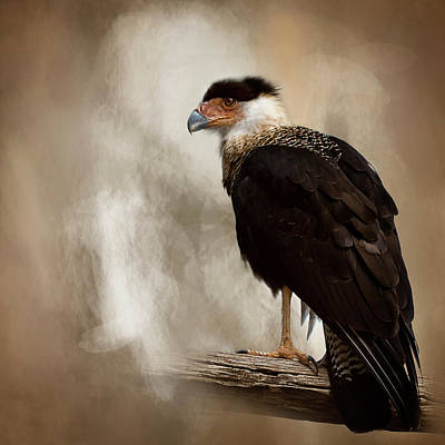 Bird Of Prey Poster by Cyndy Doty
