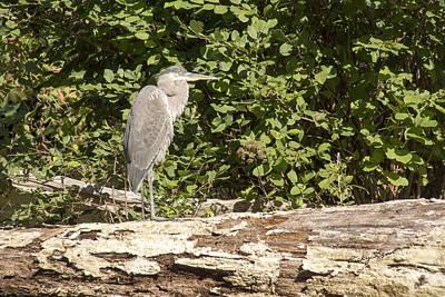 Bird On A Log Poster