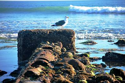 Bird On Perch At Beach Poster