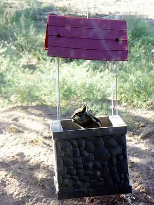 Bird Seed Thief Chipmunk Poster